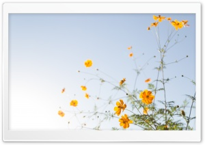 Yellow Flowers In Sunlight HD Wide Wallpaper for Widescreen