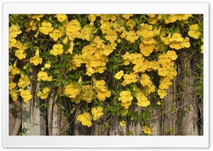 Yellow Flowers On The Fence HD Wide Wallpaper for Widescreen
