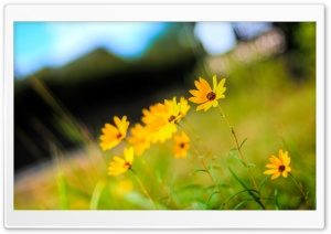 Yellow Flowers Photo HD Wide Wallpaper for Widescreen