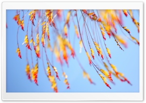 Yellow Flowers Twigs HD Wide Wallpaper for Widescreen