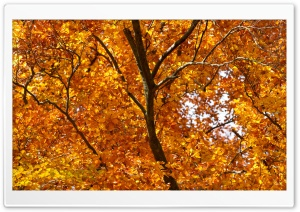 Yellow Foliage, Autumn HD Wide Wallpaper for Widescreen
