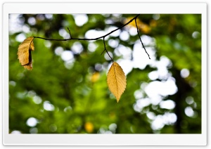 Yellow Hang 2 of 2 HD Wide Wallpaper for Widescreen