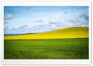Yellow Hill HD Wide Wallpaper for Widescreen