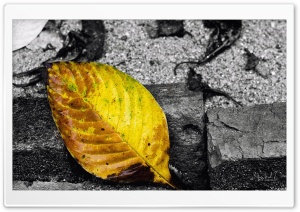 Yellow Leaf HD Wide Wallpaper for Widescreen
