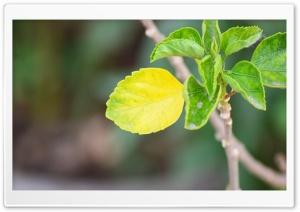 Yellow Leaf Ultra HD Wallpaper for 4K UHD Widescreen desktop, tablet & smartphone