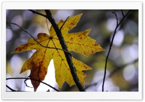 Yellow Leaf Ultra HD Wallpaper for 4K UHD Widescreen desktop, tablet & smartphone