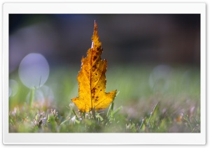 Yellow Leaf Bokeh HD Wide Wallpaper for Widescreen
