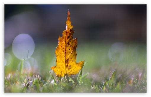 Yellow Leaf Bokeh HD wallpaper for Wide 16:10 5:3 Widescreen WHXGA WQXGA WUXGA WXGA WGA ; HD 16:9 High Definition WQHD QWXGA 1080p 900p 720p QHD nHD ; Standard 4:3 5:4 3:2 Fullscreen UXGA XGA SVGA QSXGA SXGA DVGA HVGA HQVGA devices ( Apple PowerBook G4 iPhone 4 3G 3GS iPod Touch ) ; Tablet 1:1 ; iPad 1/2/Mini ; Mobile 4:3 5:3 3:2 16:9 5:4 - UXGA XGA SVGA WGA DVGA HVGA HQVGA devices ( Apple PowerBook G4 iPhone 4 3G 3GS iPod Touch ) WQHD QWXGA 1080p 900p 720p QHD nHD QSXGA SXGA ;
