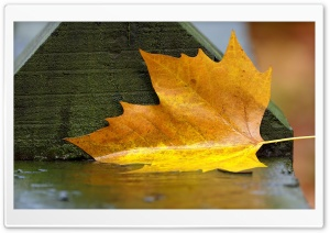 Yellow Leaf Down HD Wide Wallpaper for Widescreen