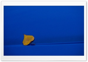 Yellow Leaf On Blue Background HD Wide Wallpaper for Widescreen