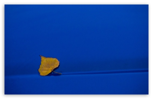 Yellow Leaf On Blue Background HD wallpaper for Wide 16:10 5:3 Widescreen WHXGA WQXGA WUXGA WXGA WGA ; HD 16:9 High Definition WQHD QWXGA 1080p 900p 720p QHD nHD ; UHD 16:9 WQHD QWXGA 1080p 900p 720p QHD nHD ; Standard 4:3 5:4 3:2 Fullscreen UXGA XGA SVGA QSXGA SXGA DVGA HVGA HQVGA devices ( Apple PowerBook G4 iPhone 4 3G 3GS iPod Touch ) ; Tablet 1:1 ; iPad 1/2/Mini ; Mobile 4:3 5:3 3:2 16:9 5:4 - UXGA XGA SVGA WGA DVGA HVGA HQVGA devices ( Apple PowerBook G4 iPhone 4 3G 3GS iPod Touch ) WQHD QWXGA 1080p 900p 720p QHD nHD QSXGA SXGA ;
