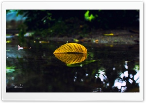 Yellow Leaf On Water HD Wide Wallpaper for Widescreen