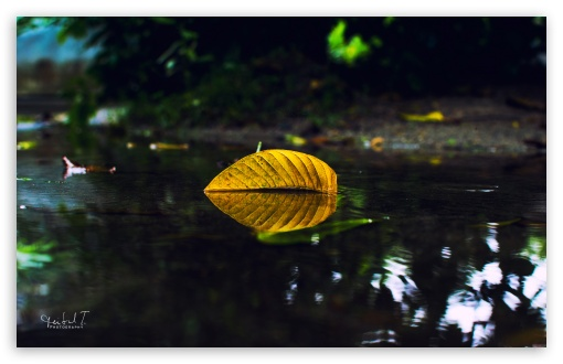 Yellow Leaf On Water ❤ 4K UHD Wallpaper for Wide 16:10 5:3 Widescreen WHXGA WQXGA WUXGA WXGA WGA ; 4K UHD 16:9 Ultra High Definition 2160p 1440p 1080p 900p 720p ; UHD 16:9 2160p 1440p 1080p 900p 720p ; Standard 4:3 5:4 3:2 Fullscreen UXGA XGA SVGA QSXGA SXGA DVGA HVGA HQVGA ( Apple PowerBook G4 iPhone 4 3G 3GS iPod Touch ) ; Smartphone 5:3 WGA ; Tablet 1:1 ; iPad 1/2/Mini ; Mobile 4:3 5:3 3:2 16:9 5:4 - UXGA XGA SVGA WGA DVGA HVGA HQVGA ( Apple PowerBook G4 iPhone 4 3G 3GS iPod Touch ) 2160p 1440p 1080p 900p 720p QSXGA SXGA ; Dual 4:3 5:4 UXGA XGA SVGA QSXGA SXGA ;