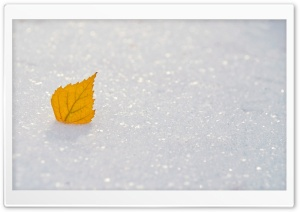 Yellow Leaf, Winter HD Wide Wallpaper for Widescreen
