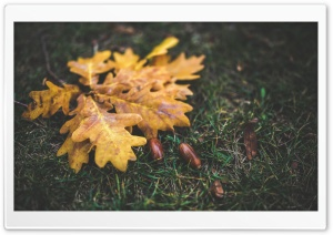 Yellow Leaves and Acorns HD Wide Wallpaper for Widescreen