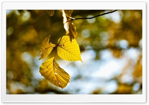 Yellow Leaves, Autumn HD Wide Wallpaper for Widescreen