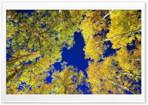 Yellow Leaves Birches, Autumn HD Wide Wallpaper for 4K UHD Widescreen desktop & smartphone