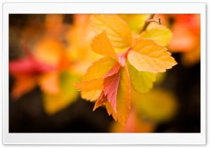 Yellow Leaves, Close Up HD Wide Wallpaper for Widescreen