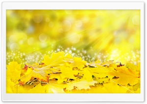 Yellow Leaves, Fall HD Wide Wallpaper for 4K UHD Widescreen desktop & smartphone