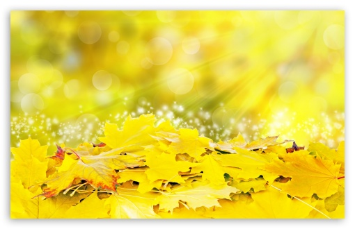 Yellow Leaves, Fall ❤ 4K UHD Wallpaper for Wide 16:10 5:3 Widescreen WHXGA WQXGA WUXGA WXGA WGA ; UltraWide 21:9 24:10 ; 4K UHD 16:9 Ultra High Definition 2160p 1440p 1080p 900p 720p ; UHD 16:9 2160p 1440p 1080p 900p 720p ; Standard 4:3 5:4 3:2 Fullscreen UXGA XGA SVGA QSXGA SXGA DVGA HVGA HQVGA ( Apple PowerBook G4 iPhone 4 3G 3GS iPod Touch ) ; Smartphone 16:9 3:2 5:3 2160p 1440p 1080p 900p 720p DVGA HVGA HQVGA ( Apple PowerBook G4 iPhone 4 3G 3GS iPod Touch ) WGA ; Tablet 1:1 ; iPad 1/2/Mini ; Mobile 4:3 5:3 3:2 16:9 5:4 - UXGA XGA SVGA WGA DVGA HVGA HQVGA ( Apple PowerBook G4 iPhone 4 3G 3GS iPod Touch ) 2160p 1440p 1080p 900p 720p QSXGA SXGA ; Dual 16:10 5:3 16:9 4:3 5:4 3:2 WHXGA WQXGA WUXGA WXGA WGA 2160p 1440p 1080p 900p 720p UXGA XGA SVGA QSXGA SXGA DVGA HVGA HQVGA ( Apple PowerBook G4 iPhone 4 3G 3GS iPod Touch ) ;
