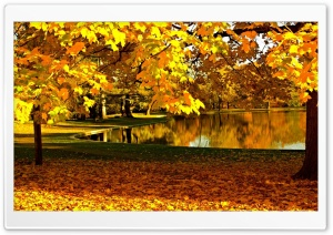Yellow Leaves In Park Pond Autumn HD Wide Wallpaper for 4K UHD Widescreen desktop & smartphone