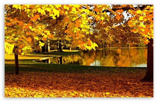 Yellow Leaves In Park Pond Autumn ❤ 4K UHD Wallpaper for Wide 16:10 5:3 Widescreen WHXGA WQXGA WUXGA WXGA WGA ; 4K UHD 16:9 Ultra High Definition 2160p 1440p 1080p 900p 720p ; Standard 4:3 5:4 3:2 Fullscreen UXGA XGA SVGA QSXGA SXGA DVGA HVGA HQVGA ( Apple PowerBook G4 iPhone 4 3G 3GS iPod Touch ) ; Tablet 1:1 ; iPad 1/2/Mini ; Mobile 4:3 5:3 3:2 16:9 5:4 - UXGA XGA SVGA WGA DVGA HVGA HQVGA ( Apple PowerBook G4 iPhone 4 3G 3GS iPod Touch ) 2160p 1440p 1080p 900p 720p QSXGA SXGA ;