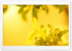 Yellow Leaves Macro HD Wide Wallpaper for Widescreen