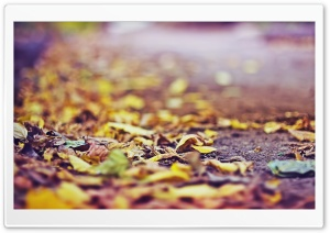 Yellow Leaves On The Ground HD Wide Wallpaper for Widescreen