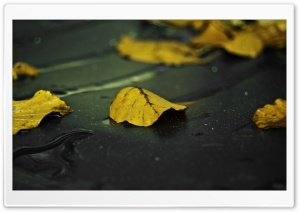 Yellow Leaves On Wet Asphalt HD Wide Wallpaper for Widescreen