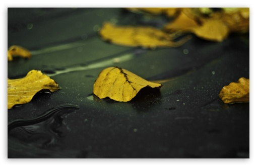 Yellow Leaves On Wet Asphalt HD wallpaper for Wide 16:10 5:3 Widescreen WHXGA WQXGA WUXGA WXGA WGA ; HD 16:9 High Definition WQHD QWXGA 1080p 900p 720p QHD nHD ; UHD 16:9 WQHD QWXGA 1080p 900p 720p QHD nHD ; Standard 4:3 5:4 3:2 Fullscreen UXGA XGA SVGA QSXGA SXGA DVGA HVGA HQVGA devices ( Apple PowerBook G4 iPhone 4 3G 3GS iPod Touch ) ; Tablet 1:1 ; iPad 1/2/Mini ; Mobile 4:3 5:3 3:2 16:9 5:4 - UXGA XGA SVGA WGA DVGA HVGA HQVGA devices ( Apple PowerBook G4 iPhone 4 3G 3GS iPod Touch ) WQHD QWXGA 1080p 900p 720p QHD nHD QSXGA SXGA ; Dual 16:10 5:3 16:9 4:3 5:4 WHXGA WQXGA WUXGA WXGA WGA WQHD QWXGA 1080p 900p 720p QHD nHD UXGA XGA SVGA QSXGA SXGA ;