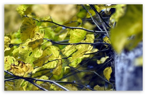 Yellow Linden Leaves ❤ 4K UHD Wallpaper for Wide 16:10 5:3 Widescreen WHXGA WQXGA WUXGA WXGA WGA ; 4K UHD 16:9 Ultra High Definition 2160p 1440p 1080p 900p 720p ; Standard 4:3 5:4 3:2 Fullscreen UXGA XGA SVGA QSXGA SXGA DVGA HVGA HQVGA ( Apple PowerBook G4 iPhone 4 3G 3GS iPod Touch ) ; Tablet 1:1 ; iPad 1/2/Mini ; Mobile 4:3 5:3 3:2 16:9 5:4 - UXGA XGA SVGA WGA DVGA HVGA HQVGA ( Apple PowerBook G4 iPhone 4 3G 3GS iPod Touch ) 2160p 1440p 1080p 900p 720p QSXGA SXGA ; Dual 4:3 5:4 UXGA XGA SVGA QSXGA SXGA ;