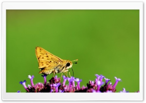 Yellow Moth Macro HD Wide Wallpaper for Widescreen