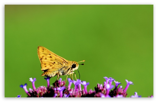 Yellow Moth Macro ❤ 4K UHD Wallpaper for Wide 16:10 5:3 Widescreen WHXGA WQXGA WUXGA WXGA WGA ; UltraWide 21:9 ; 4K UHD 16:9 Ultra High Definition 2160p 1440p 1080p 900p 720p ; Standard 4:3 5:4 3:2 Fullscreen UXGA XGA SVGA QSXGA SXGA DVGA HVGA HQVGA ( Apple PowerBook G4 iPhone 4 3G 3GS iPod Touch ) ; Smartphone 16:9 3:2 5:3 2160p 1440p 1080p 900p 720p DVGA HVGA HQVGA ( Apple PowerBook G4 iPhone 4 3G 3GS iPod Touch ) WGA ; Tablet 1:1 ; iPad 1/2/Mini ; Mobile 4:3 5:3 3:2 16:9 5:4 - UXGA XGA SVGA WGA DVGA HVGA HQVGA ( Apple PowerBook G4 iPhone 4 3G 3GS iPod Touch ) 2160p 1440p 1080p 900p 720p QSXGA SXGA ; Dual 16:10 5:3 16:9 4:3 5:4 3:2 WHXGA WQXGA WUXGA WXGA WGA 2160p 1440p 1080p 900p 720p UXGA XGA SVGA QSXGA SXGA DVGA HVGA HQVGA ( Apple PowerBook G4 iPhone 4 3G 3GS iPod Touch ) ;