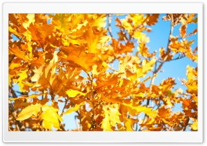 Yellow Oak Leaves HD Wide Wallpaper for Widescreen