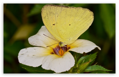 Yellow Orange Tip Butterly ❤ 4K UHD Wallpaper for Wide 16:10 5:3 Widescreen WHXGA WQXGA WUXGA WXGA WGA ; 4K UHD 16:9 Ultra High Definition 2160p 1440p 1080p 900p 720p ; UHD 16:9 2160p 1440p 1080p 900p 720p ; Standard 4:3 5:4 3:2 Fullscreen UXGA XGA SVGA QSXGA SXGA DVGA HVGA HQVGA ( Apple PowerBook G4 iPhone 4 3G 3GS iPod Touch ) ; Smartphone 5:3 WGA ; Tablet 1:1 ; iPad 1/2/Mini ; Mobile 4:3 5:3 3:2 16:9 5:4 - UXGA XGA SVGA WGA DVGA HVGA HQVGA ( Apple PowerBook G4 iPhone 4 3G 3GS iPod Touch ) 2160p 1440p 1080p 900p 720p QSXGA SXGA ;