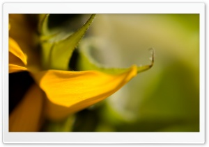Yellow Petal HD Wide Wallpaper for Widescreen