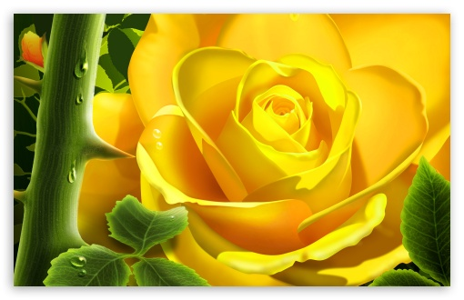 Yellow Rose Illustration UltraHD Wallpaper for Wide 16:10 5:3 Widescreen WHXGA WQXGA WUXGA WXGA WGA ; 8K UHD TV 16:9 Ultra High Definition 2160p 1440p 1080p 900p 720p ; Standard 4:3 5:4 3:2 Fullscreen UXGA XGA SVGA QSXGA SXGA DVGA HVGA HQVGA ( Apple PowerBook G4 iPhone 4 3G 3GS iPod Touch ) ; iPad 1/2/Mini ; Mobile 4:3 5:3 3:2 16:9 5:4 - UXGA XGA SVGA WGA DVGA HVGA HQVGA ( Apple PowerBook G4 iPhone 4 3G 3GS iPod Touch ) 2160p 1440p 1080p 900p 720p QSXGA SXGA ;