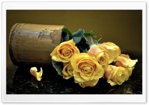 Yellow Roses HD Wide Wallpaper for Widescreen