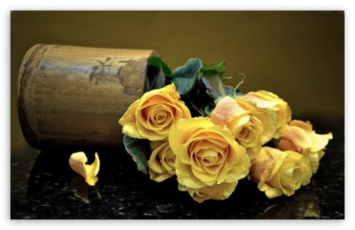 Yellow Roses HD wallpaper for Wide 16:10 5:3 Widescreen WHXGA WQXGA WUXGA WXGA WGA ; HD 16:9 High Definition WQHD QWXGA 1080p 900p 720p QHD nHD ; UHD 16:9 WQHD QWXGA 1080p 900p 720p QHD nHD ; Standard 4:3 5:4 3:2 Fullscreen UXGA XGA SVGA QSXGA SXGA DVGA HVGA HQVGA devices ( Apple PowerBook G4 iPhone 4 3G 3GS iPod Touch ) ; iPad 1/2/Mini ; Mobile 4:3 5:3 3:2 16:9 5:4 - UXGA XGA SVGA WGA DVGA HVGA HQVGA devices ( Apple PowerBook G4 iPhone 4 3G 3GS iPod Touch ) WQHD QWXGA 1080p 900p 720p QHD nHD QSXGA SXGA ;