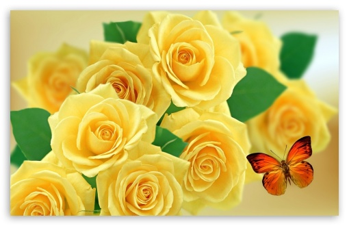 Yellow Roses and Butterflies ❤ 4K UHD Wallpaper for Wide 16:10 5:3 Widescreen WHXGA WQXGA WUXGA WXGA WGA ; 4K UHD 16:9 Ultra High Definition 2160p 1440p 1080p 900p 720p ; Standard 4:3 5:4 3:2 Fullscreen UXGA XGA SVGA QSXGA SXGA DVGA HVGA HQVGA ( Apple PowerBook G4 iPhone 4 3G 3GS iPod Touch ) ; Tablet 1:1 ; iPad 1/2/Mini ; Mobile 4:3 5:3 3:2 16:9 5:4 - UXGA XGA SVGA WGA DVGA HVGA HQVGA ( Apple PowerBook G4 iPhone 4 3G 3GS iPod Touch ) 2160p 1440p 1080p 900p 720p QSXGA SXGA ;