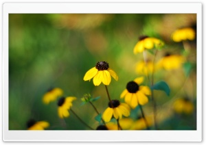 Yellow Small Flowers HD Wide Wallpaper for Widescreen