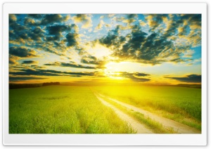 Yellow Sunshine HD Wide Wallpaper for Widescreen