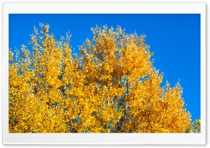 Yellow Tree HD Wide Wallpaper for Widescreen