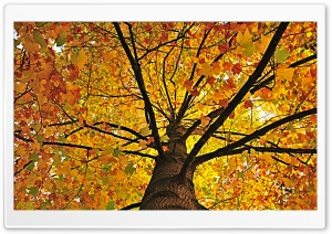 Yellow Tree Hdr HD Wide Wallpaper for Widescreen