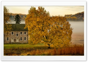 Yellow Tree, House, Mist, Autumn Ultra HD Wallpaper for 4K UHD Widescreen desktop, tablet & smartphone