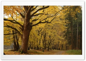 Yellow Tree In Forest HD Wide Wallpaper for Widescreen