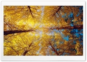 Yellow Trees HD Wide Wallpaper for Widescreen