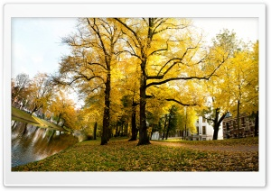 Yellow Trees - Sunny Autumn Afternoon In Utrecht HD Wide Wallpaper for Widescreen