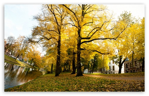 Yellow Trees - Sunny Autumn Afternoon In Utrecht HD wallpaper for Standard 4:3 5:4 Fullscreen UXGA XGA SVGA QSXGA SXGA ; Wide 16:10 5:3 Widescreen WHXGA WQXGA WUXGA WXGA WGA ; HD 16:9 High Definition WQHD QWXGA 1080p 900p 720p QHD nHD ; Other 3:2 DVGA HVGA HQVGA devices ( Apple PowerBook G4 iPhone 4 3G 3GS iPod Touch ) ; Mobile VGA WVGA iPhone iPad PSP Phone - VGA QVGA Smartphone ( PocketPC GPS iPod Zune BlackBerry HTC Samsung LG Nokia Eten Asus ) WVGA WQVGA Smartphone ( HTC Samsung Sony Ericsson LG Vertu MIO ) HVGA Smartphone ( Apple iPhone iPod BlackBerry HTC Samsung Nokia ) Sony PSP Zune HD Zen ; Tablet 2 Android 3 DVGA HVGA HQVGA devices ( Apple PowerBook G4 iPhone 4 3G 3GS iPod Touch ) ;