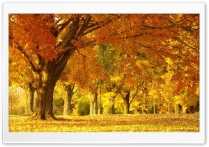 Yellow Trees, Fall HD Wide Wallpaper for Widescreen